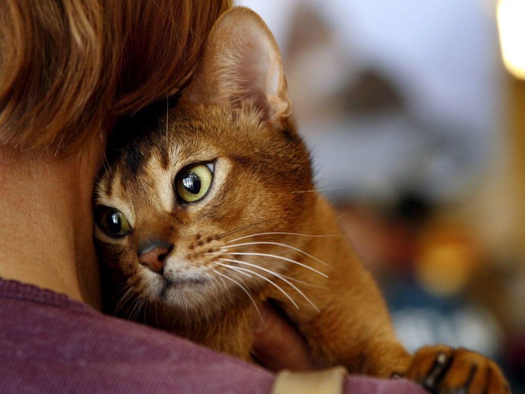 Заражение гельминтами от домашних животных
